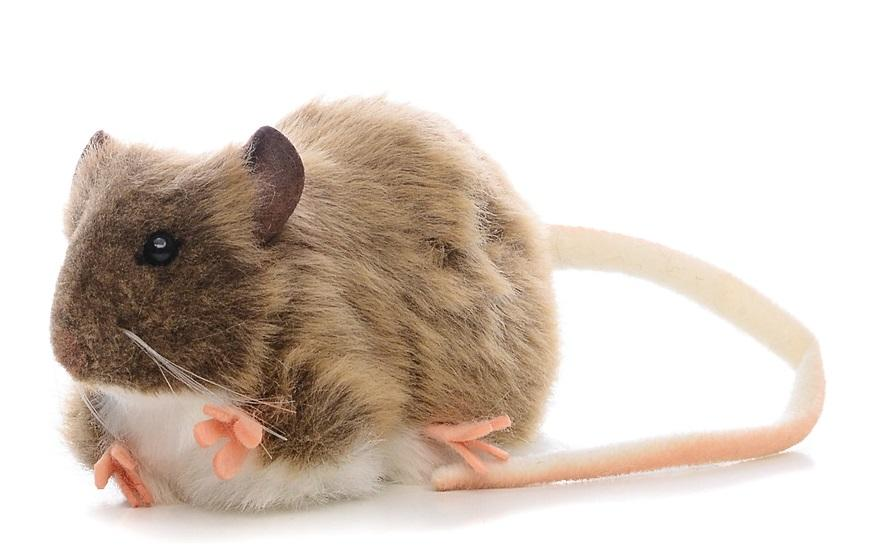 реально крыса игрушка картинка гитара