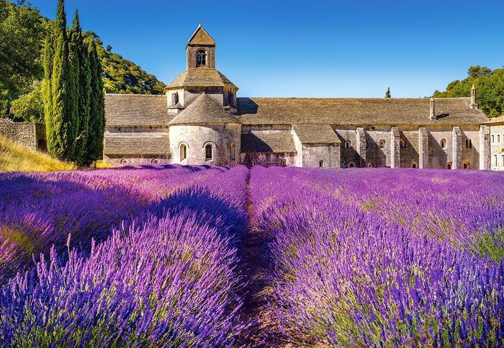 Картинки лавандовые поля во франции